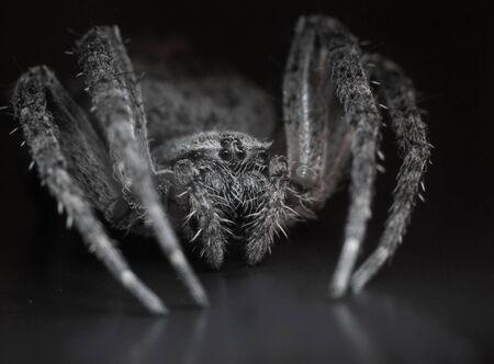 big spider in darkness, image