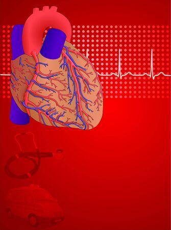 fisiologia: Anatom�a del coraz�n humano y fondo de Fisiolog�a rojo, ilustraci�n