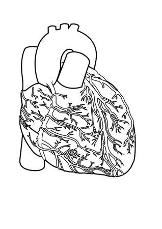 menschliche Herz Anatomie Bild, Schwarz-Wei�-Darstellung Stockfoto - 9775128