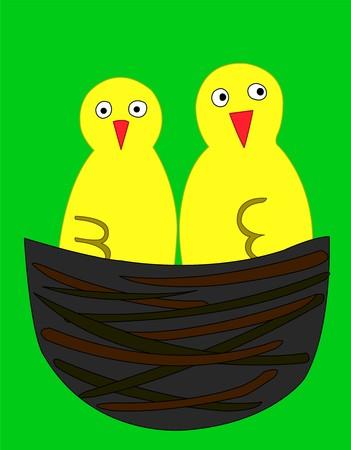 2 yellow bird, vecotor illustration