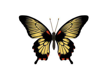 lepidoptera: butterfly Machaon on the white background, illustration