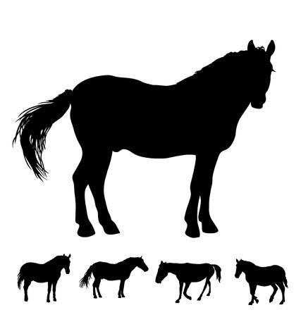 hobble: horse silhouette, vector illustration