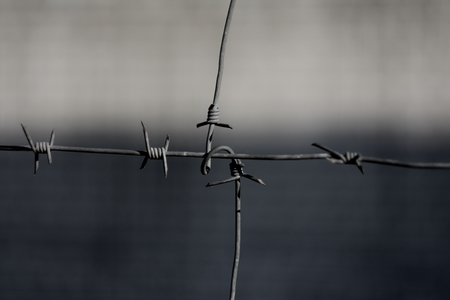barbed wire the gray background