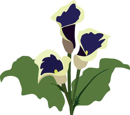 white lily: white lily Illustration