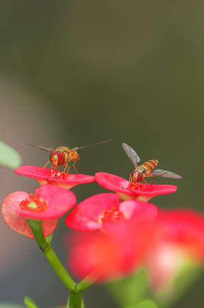 hover: Hover flies
