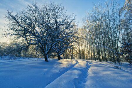 Alte Garten im Schnee im Winter mit der Bahn. Birken am rechten und Sonnenuntergang im Hintergrund.