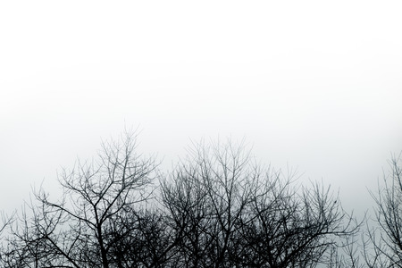 árbol abstracto en blanco y negro Foto de archivo