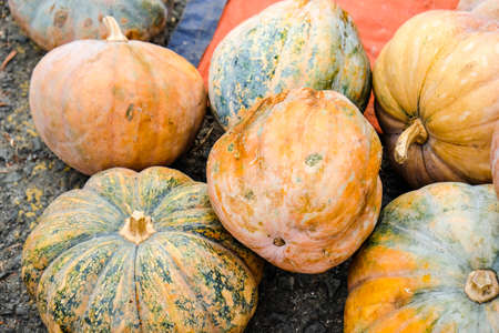 pumpkin on display for sale at local farmers market