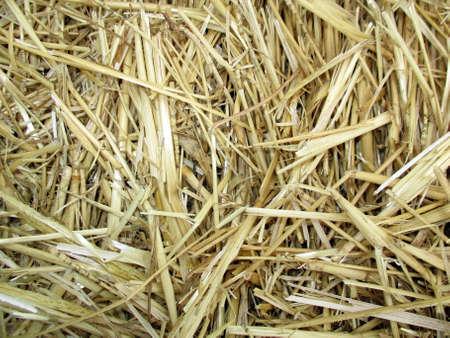 shredding: wheat straw