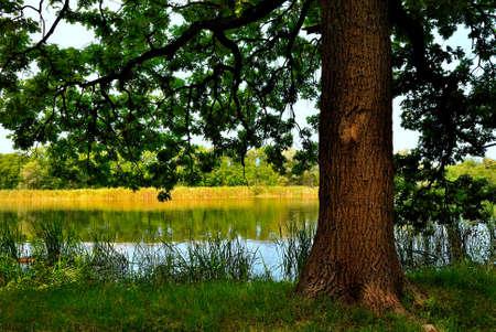 shady: Shady oak.jpg Stock Photo