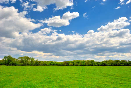 Spring green field under blue cloudy sky photo