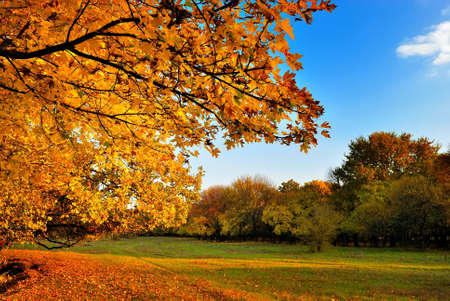 Autumn maple tree on blue sky background photo