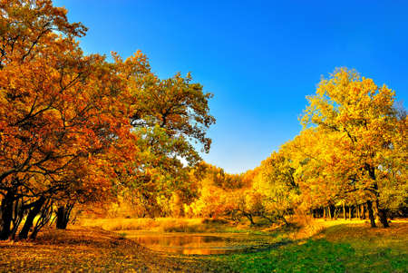 Autumn forest and a small lake in the background of blue sky photo