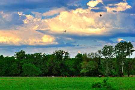 Summer evening on a green meadow under the beautiful sky photo