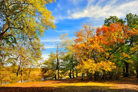 fall scenery: Autumn trees on the bank of the river under the blue sky