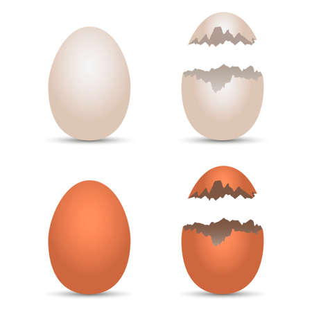 Realistic chicken white and brown eggs with cracked effect. Vector illustration Illustration
