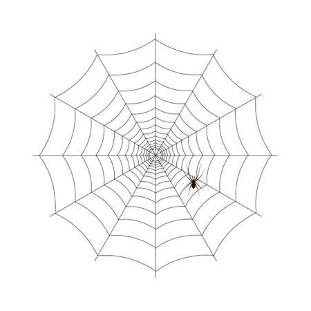 Spider and web for Halloween. vector