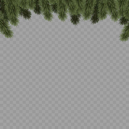 Christmas tree branches on transparent background. Vector Vettoriali