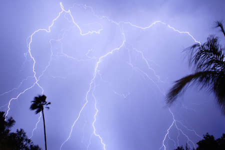 monsoon clouds: Lightning Thunderstorm and palm tree