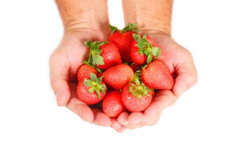 明るい赤いイチゴの握り。白い背景上に分離。 写真素材
