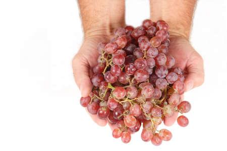 明るい赤の種なしブドウの握り。
