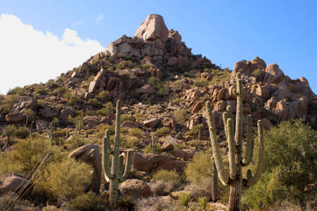 Desert with big boulder rocks and saguaro cactus. Imagens