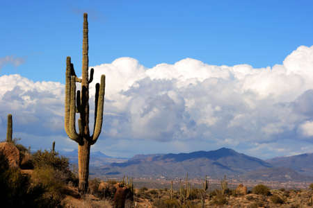 high desert floor with big saguaro cactus,boulders, mountains  and big fluffy clouds. Imagens
