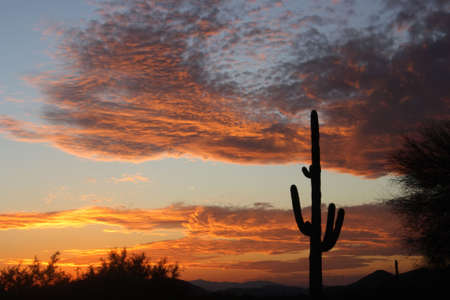 saguaro: Beautiful desert sunset with a giant saguaro cactus.