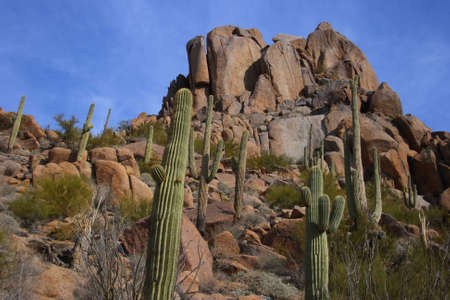 Desert scenic with big boulder rocks, giant saguaro cactus, brush and blue sky with light white clouds.