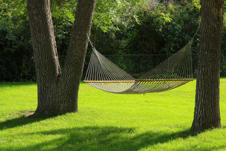 Hammock between two trees with green grass. Summertime at its best.   Stock Photo