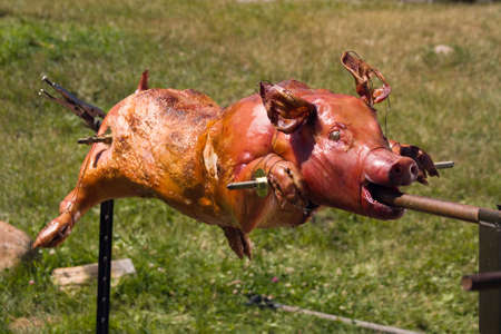 Golden whole Roasted Pig on a Spit. Spit Roasting is a Traditional Luau Method of Cooking a Whole Pig.