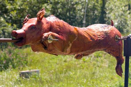 spanferkel: Insgesamt goldenen gebratenes Schwein am Spie�. Spie� ist eine traditionelle hawaiianische luau Methode des Kochens ein ganzes Schwein. Gr�nen Hintergrund.