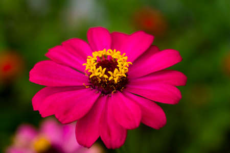 redolence: beautiful red flower with yellow petals