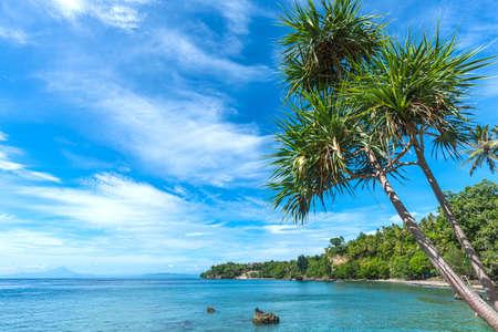 Schönes klares Wasser am Strand, schöner blauer Himmel mit Wolken, Pandanus (Pandanus tectorius)