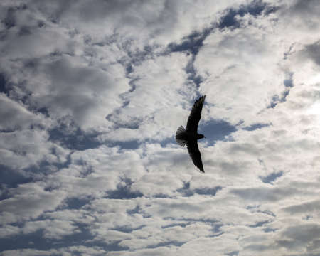Bird flying at the sky