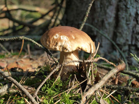 detritus: close-up of single fungus or groups of fungi in the forest