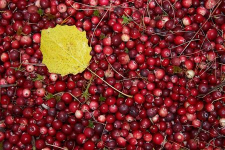 Cranberries and yellow leaf