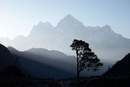 Lone tree at sunrise, Himalayas, Nepal Stock Photo