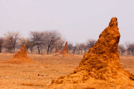 Huge termite mounds in Namibia all leaning in the same direction