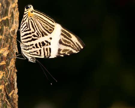 zebra mosiac butterfly at Butterfly Wonderworld in Scottsdale, Arizona.
