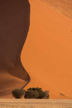 The simple beauty of the Sossusvlei sand dunes is shown with a gentle curve and shadows leading to a few isolated trees.