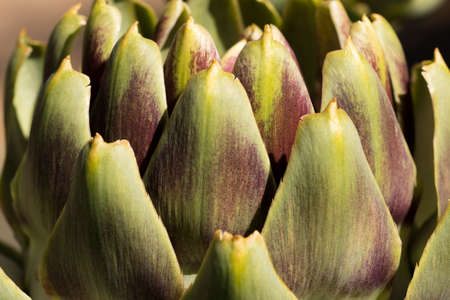 By choosing to shoot an exctreme close-up of an artichoke, it becomes more of an abstract pattern. Фото со стока