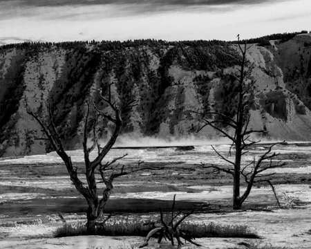 Black & white rendering emphasizes starkness of this geothermal landscape where two dead tries rise from the geyser pools