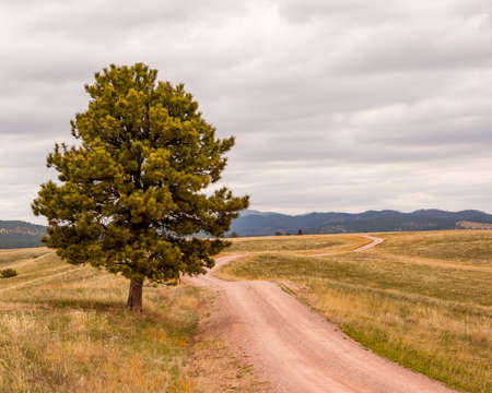 Lone tree along winding road and against cloudy skies near Custers Last Stand in South Dakota