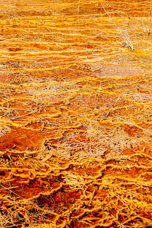 Mineral deposits form these detailed textures in Yellowstone National Park 스톡 콘텐츠
