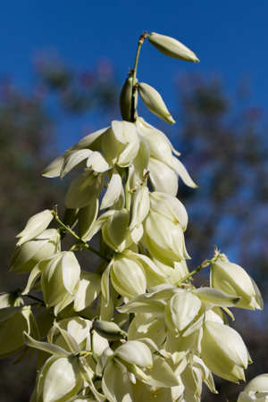 Closeup of plant with pale green flower petals Stock fotó