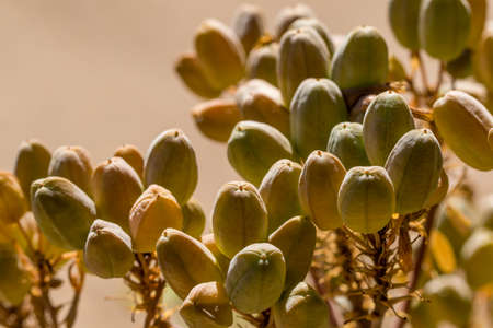 closeup of plant with interesting seed casings Banco de Imagens