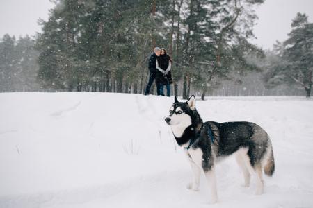 Husky dog walking on leash in snowy winter weather