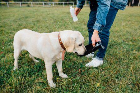 Dog labrador drinks water from drinkers Banco de Imagens
