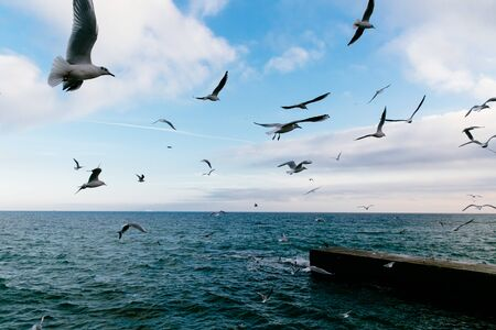 Flying seagulls over the dark sea and pier. Blue cloudy sky. Banco de Imagens